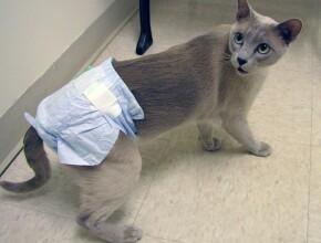 Лучшие памперсы для кошек