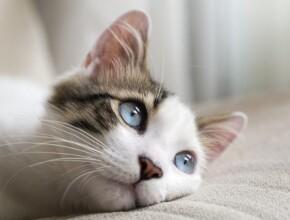 Паралич у кошек: причины и методы лечения