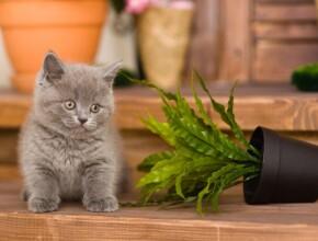 Почему кошки сбрасывают вещи?