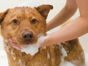 Почему нельзя мыть собак человеческим шампунем?