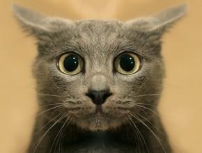 Подборка — новые приколы с кошками