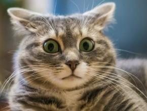 Подборка видео — кошки разговаривают