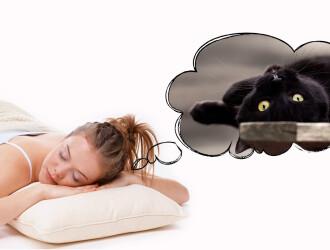 Посмотрим в сонник: к чему снятся кошки