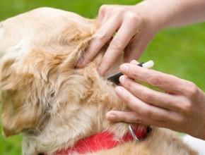 Самые эффективные капли от клещей для собак