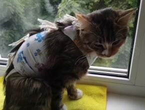Кошка после стерилизации: что нужно знать?
