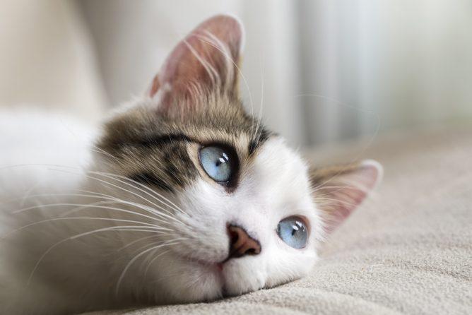 паралич кошка
