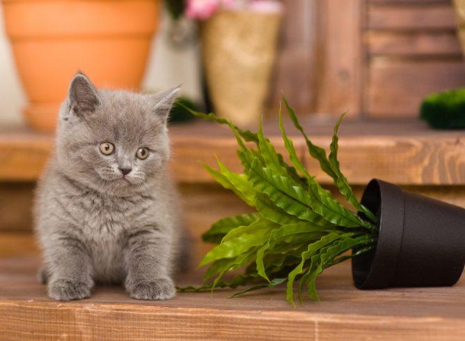 котенок уронил цветок