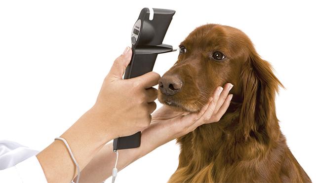 измерение внутреглазного давления у собаки