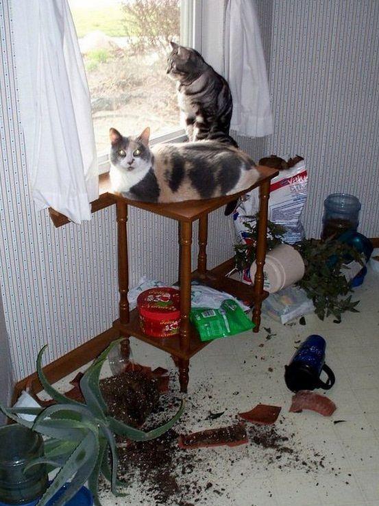 кошачий разгром