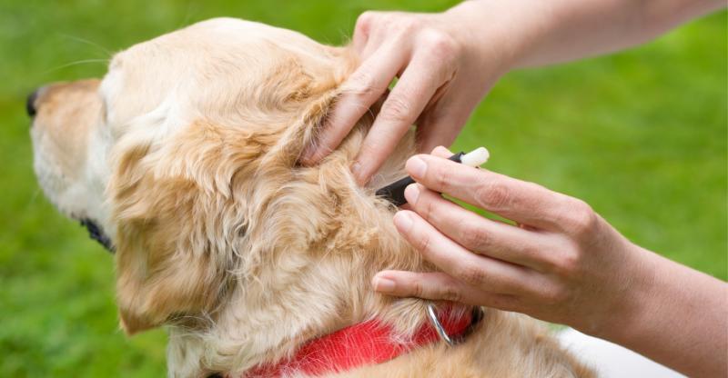 Нанесение капель на собаку