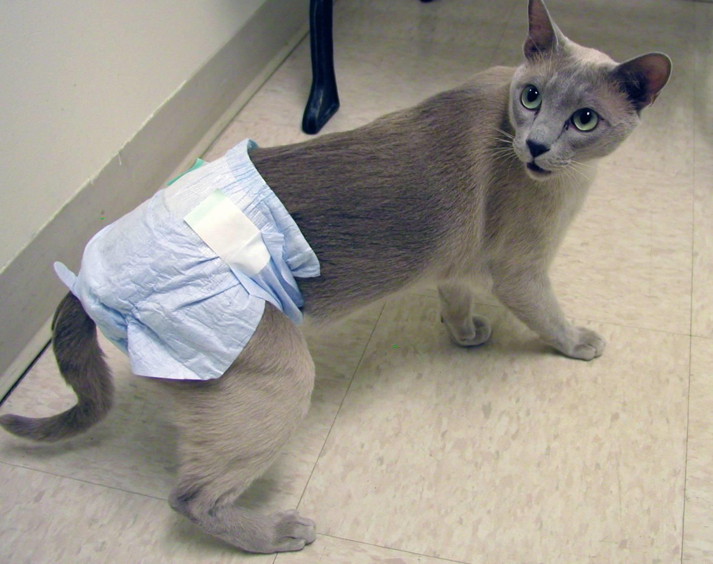 Кошка в подгузнике